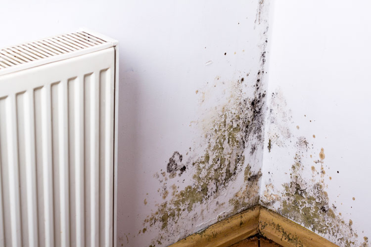 How Does Mold Get in Your Home?