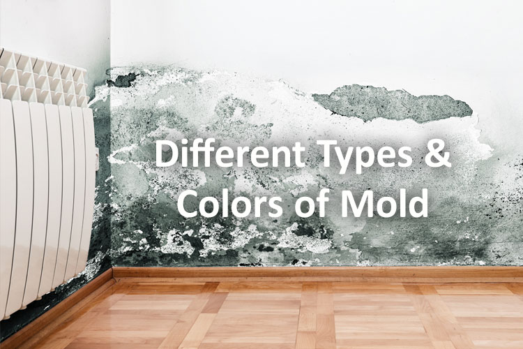 Mold Types & Colors