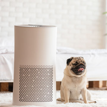 5 Best Air Purifiers for Pet Owners