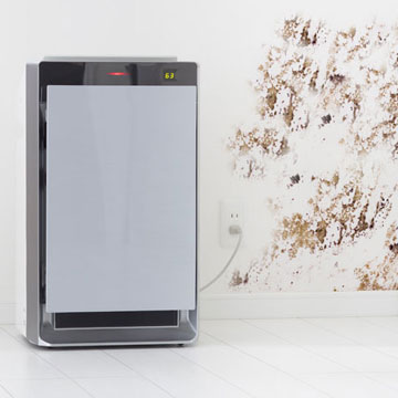 5 Best Air Purifiers for Mold